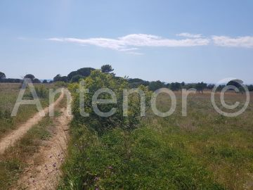 Agricultural plot, Sale, Nin, Nin